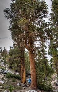 mountain-hiker-trees-32