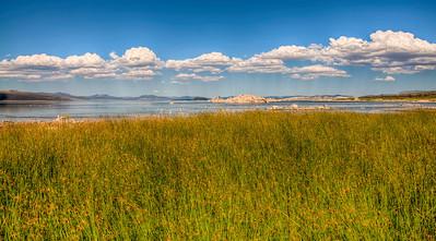 mono-lake-grasses-2