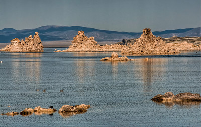 mono-lake-flies