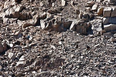 sierra-mountains-hikers