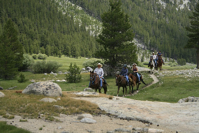 Horses in Lyell Canyon.