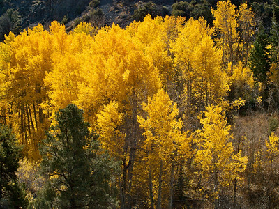 Looking Down on Golden Aspen from 89 Copyright 2009 Neil Stahl