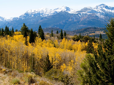 Snowy Mountains over a Golden Forest from 89 Copyright 2009 Neil Stahl