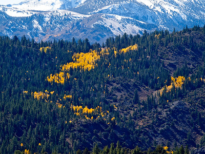 Green and Gold and Snowy Mountains from 89 Copyright 2009 Neil Stahl
