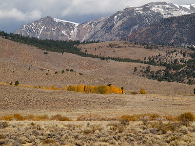 Colorful Aspen Under Snowy Mountains Copyright 2009 Neil Stahl