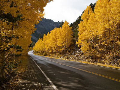 Curve by Golden Aspen Copyright 2009 Neil Stahl