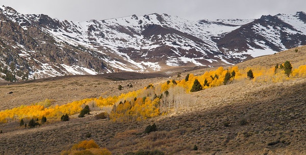 Aspen in the Sun with Snowy Mountains, June Lake Loop Copyright 2009 Neil Stahl