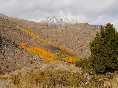 Hillside with streams of Color, June Lake Loop Copyright 2009 Neil Stahl