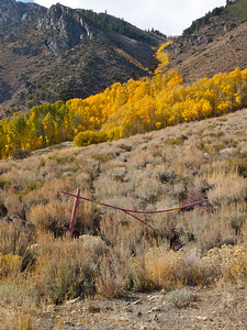 Aspen and Old Gate Copyright 2009 Neil Stahl