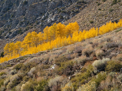 Hillside of Color, June Lake Loop Copyright 2009 Neil Stahl