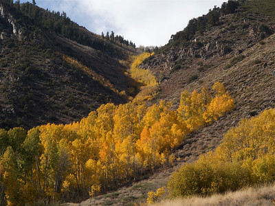 A Draw of Aspen Copyright 2009 Neil Stahl
