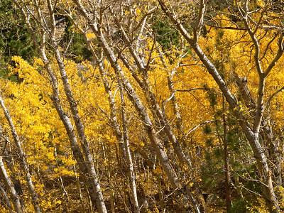 Aerie Crag Aspen Grove Copyright 2009 Neil Stahl