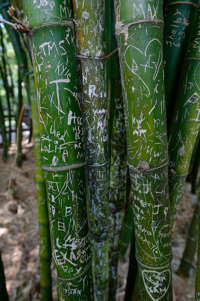 Bamboo Graffiti - Sarasota Jungle Gardens - Sarasota Florida
