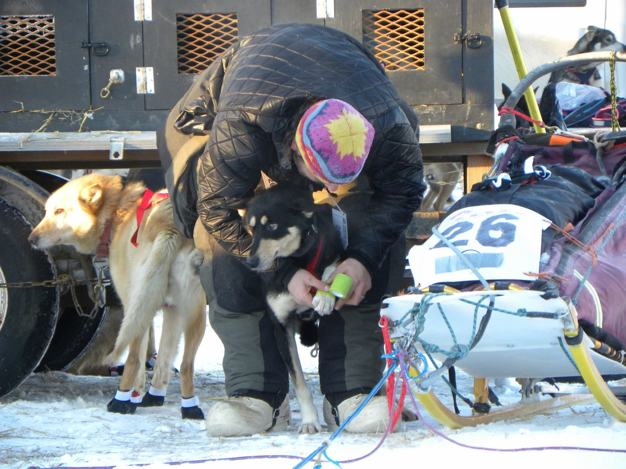 Putting booties on the dogs' feet to protect them from icy trails, which can cut their pads.