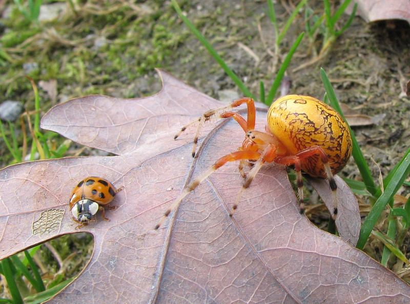 Spider and lady bug.