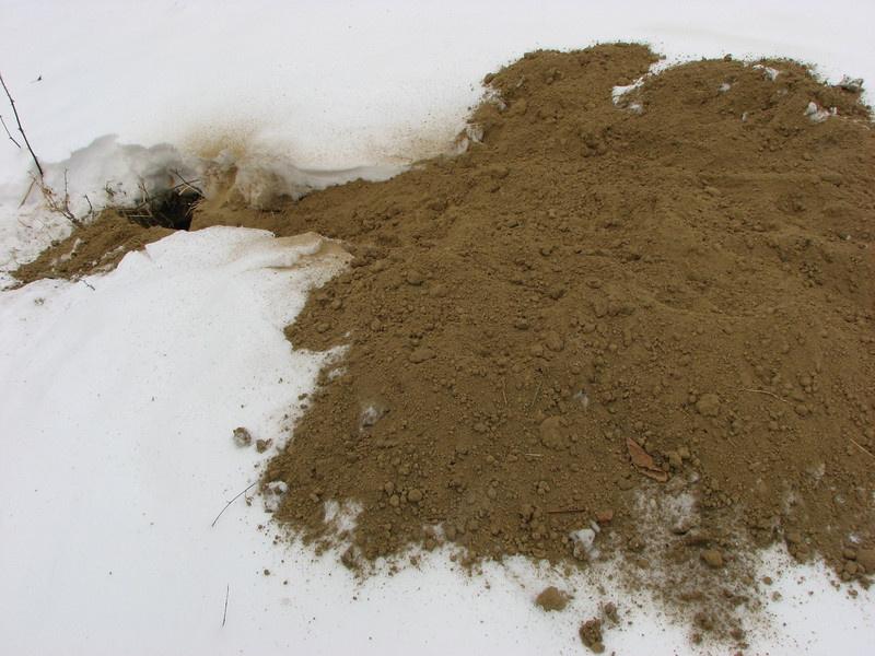 """Not sure what critter made the hole, but this photo was taken just 2 days after it stopped snowing. This was taken in Wickiup Hills Park at the base of an """"Indian mound"""". The hole was about 7 inches in diameter. This is what is so great about getting out in the woods: you never know what you might find."""