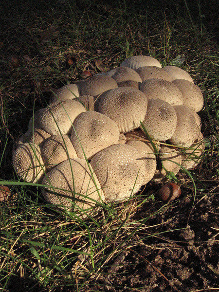 Tightly packed puffballs