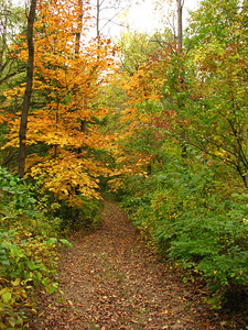 A path in the woods. It is hard to tell by the photo, but this is steeply downhill.