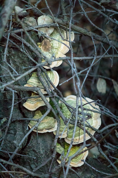 fungus in bramble