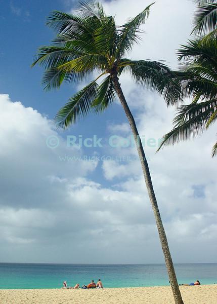 Sunbathers enjoy a Hawaiian beach.  Waimea Beach, North Shore, Oahu, Hawaii.  © Rick Collier<br /> <br /> <br /> <br /> <br /> <br /> <br /> Hawaii Hawai'i Hawaiian Oahu Waimea Beach North Shore ocean beach tourist tourists family sunbathing sunbather