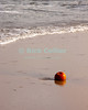 "A seasonal pumpkin ""offering"" left by a walker rolls in the surf at Bethany Beach, Delaware, USA."