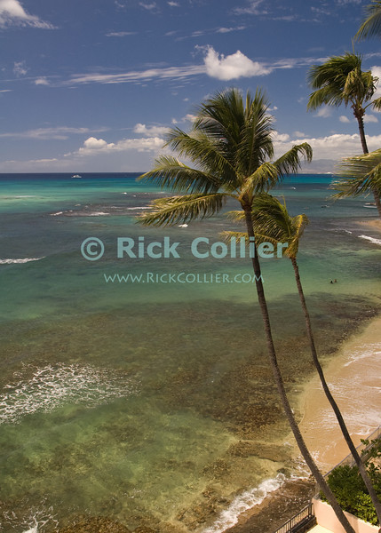The reef spreads out from Waikiki beach, Honolulu, Hawaii.  <br /> <br /> <br /> <br /> <br /> Hawaii Waikiki Honolulu reef beach palm tree sea view