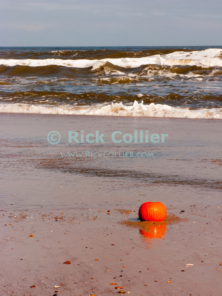 """A seasonal pumpkin """"offering"""" left by a walker rolls in the surf at Bethany Beach, Delaware, USA."""