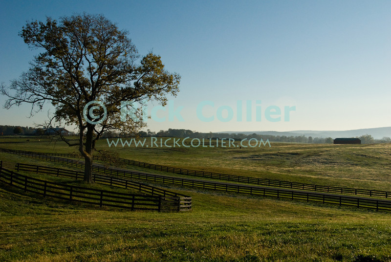 """Morning Light"" -- The sun prepares to rise over Long Branch Farm, Winchester, Virginia, USA.  © RickCollier.com<br /> <br /> <br /> <br /> <br /> <br /> ""balloon festival""; USA; Virginia; Winchester; ""Long Branch""; ""Long Branch Farm""; field; tree; fence; fences; dawn; morning; dew; frost;"