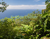 Saba - An scenic view - ocean panorama of the Caribbean sea, framed by the forest.  From about 2/3 of the way up Mt. Scenery.  © Rick Collier