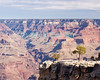 The Grand Canyon, Arizona, USA. Two small, lone trees struggle to survive on a cliff overlooking the Grand Canyon.  © Rick Collier<br /> <br /> <br /> <br /> <br /> <br /> <br /> <br /> US USA Arizona Grand Canyon Colorado River valley sun shadow day daylight tree trees cliff overlook river bed riverbed