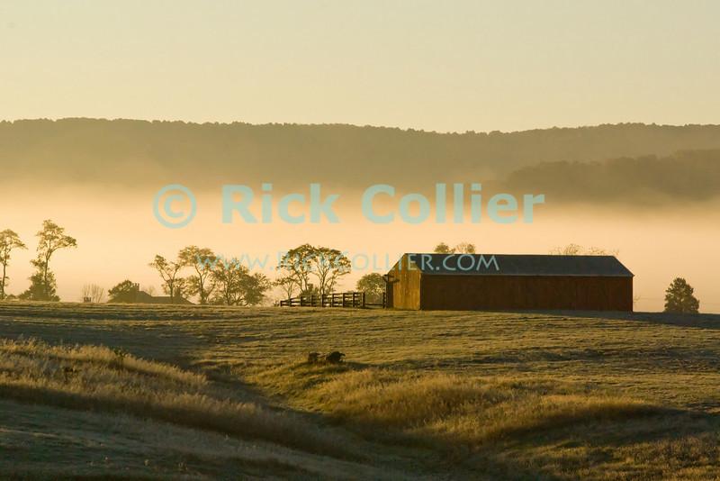 "Long Branch Farm, Millwood, near Winchester, VA -- The rising sun backlights trees and farm buildings on a frosty fall morning.<br /> <br /> <br /> <br /> <br /> Winchester; Virginia; VA; USA; Millwood; ""Long Branch""; ""Long Branch Plantation""; ""Long Branch Farm""; dawn; sunrise; morning; ""first light""; farm; ""farm buildings""; barn; field; fields; frost; mist; fog; pasture;"