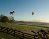"""Chasing the ball"" -- Hot air balloons take flight over fields and patures in early morning at the annual Winchester Balloon Festival.  Long Branch Farm, Winchester, Virginia, USA.  © RickCollier.com<br /> <br /> <br /> <br /> <br /> <br /> ""balloon festival""; USA; Virginia; Winchester; ""Long Branch""; ""Long Branch Farm""; field; tree; fence; fences; dawn; morning; dew; frost; balloon; lift; ""balloon lift""; field; pasture; frost; mist; sunrise; fog; dog; fun; funny; shape; ""dog balloon"";"
