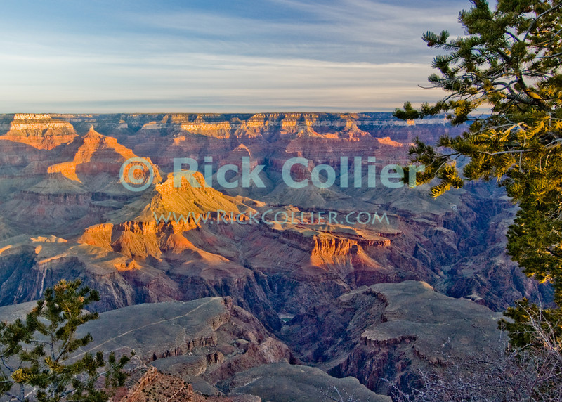 The Grand Canyon, Arizona, USA.  Pines growing near the ledge frame the Grand Canyon as the first daylight sends sunlight to illuminate the cliffs on a cold February morning.  © Rick Collier<br /> <br /> <br /> <br /> <br /> <br /> <br /> <br /> US USA Arizona Grand Canyon Colorado River sun sunrise shadow day daylight dawn tree cliff overlook river bed riverbed valley