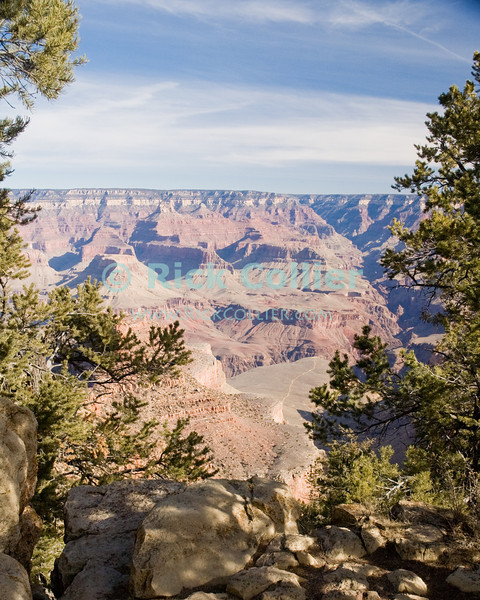 The Grand Canyon, Arizona, USA. Pine trees and rocks at the edge of the canyon frame the spectacular view of the Colorado River valley.  © Rick Collier<br /> <br /> <br /> <br /> <br /> <br /> <br /> <br /> US USA Arizona Grand Canyon Colorado River valley sun shadow day daylight cliff overlook river bed riverbed