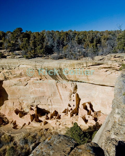 """Mesa Verde, Colorado, USA.  The dwelling now known as """"Square Tower House"""" occupies a sheltered indentation in the cliff face, rather than a cave.  It was also built and occupied by the ancestral puebloans who occuped the """"cave dwellings"""" at Mesa Verde National Park.  The cliff dwellings at Mesa Verde were built by ancestral puebloans in the period A.D. 600 to A.D. 1300. © Rick Collier<br /> <br /> <br /> <br /> <br /> <br /> <br /> <br /> US USA Colorado Mesa Verde Square Tower House cliff dwelling pueblo Native American village town structure cave woods forest cave dwelling ancestral puebloan Anasazi"""