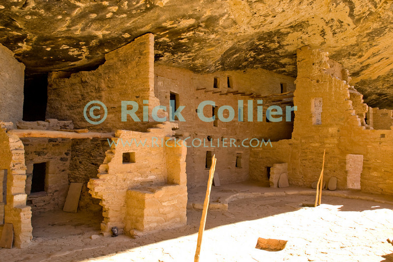 """Mesa Verde, Colorado, USA.  Native American mud brick pueblo structures occupy the """"Spruce Tree House"""" cave at Mesa Verde National Park.  Protruding wood poles mark the tops of ladders leading down into kivas below ground level.  The cliff dwellings at Mesa Verde were built by ancestral puebloans in the period A.D. 600 to A.D. 1300. © Rick Collier<br /> <br /> <br /> <br /> <br /> <br /> <br /> <br /> US USA Colorado Mesa Verde cliff dwelling pueblo Spruce Tree House Native American village town structure cave woods forest cave dwelling ancestral puebloan Anasazi"""