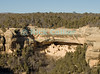 "Mesa Verde, Colorado, USA.  The dwelling now known as ""Cliff Palace"" is the largest of the ancestral pueblo cave structures at Mesa Verde National Park.  The cliff dwellings at Mesa Verde were built by ancestral puebloans in the period A.D. 600 to A.D. 1300. © Rick Collier<br /> <br /> <br /> <br /> <br /> <br /> <br /> <br /> US USA Colorado Mesa Verde Cliff Palace cliff dwelling pueblo Native American village town structure cave woods forest cave dwelling ancestral puebloan Anasazi"