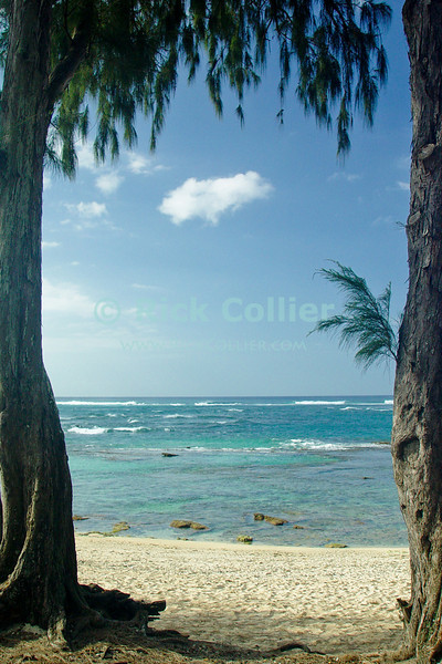 A beach and the surf offshore are framed by stands of old pine trees, near North Shore, Oahu, Hawaii.  © Rick Collier<br /> <br /> <br /> <br /> <br /> <br /> <br /> <br /> Hawaii Hawai'i Oahu North Shore beach surf rocks reef trees waves ocean sea seashore