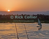 A fishing boat -- falluka -- returns home, backlit by the sunset over the Nile River, Luxor Egypt.  © Rick Collier<br /> <br /> <br /> <br /> <br /> <br /> <br /> Egypt Egyptian Karnak Luxor tourist tourism history historic antiquity antiquities Thebes Theban Thebian barque boat fishing falluka fallouqa Nile 'Nile River' river cruise