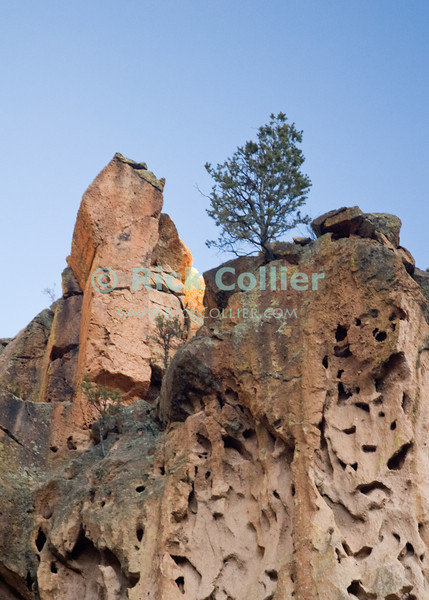 """Bandelier National Monument, near Los Alamos and Santa Fe, New Mexico, USA.  A lone pine tree stands at the top of the cliff above """"Alcove House"""" at the top of Frijoles Canyon.  © Rick Collier<br /> <br /> <br /> <br /> <br /> <br /> <br /> US USA New Mexico Santa Fe Bandelier National Monument Frijoles Canyon valley canyon view tree trees forest woods"""