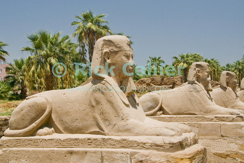 """Luxor Temple, Egypt.  Sphinx statues originally lined the entire length of the road from Luxor to Karnak temples.  Originally joined by both the Nile River and a road to the Temple of Amon at Karnak, Luxor was temple was considered the """"harem of the south,"""" the home of Amon's wife Mut and son Khonsu.  Once a year, a ceremonial procession took the statue of Amon from Karnak to spend the night with his family at Luxor.  © Rick Collier<br /> <br /> <br /> <br /> <br /> <br /> <br /> Egypt Egyptian Karnak Luxor Amon Amun tourist tourism history historic antiquity antiquities ruins temple tomb pylon wall column pillar ramp ancient 'ancient Egypt' Thebes Theban Thebian Mut Konsu Amun-Min Khonsu carving Ramses 'Ramses II' statue sphinx road"""