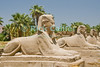 "Luxor Temple, Egypt.  Sphinx statues originally lined the entire length of the road from Luxor to Karnak temples.  Originally joined by both the Nile River and a road to the Temple of Amon at Karnak, Luxor was temple was considered the ""harem of the south,"" the home of Amon's wife Mut and son Khonsu.  Once a year, a ceremonial procession took the statue of Amon from Karnak to spend the night with his family at Luxor.  © Rick Collier<br /> <br /> <br /> <br /> <br /> <br /> <br /> Egypt Egyptian Karnak Luxor Amon Amun tourist tourism history historic antiquity antiquities ruins temple tomb pylon wall column pillar ramp ancient 'ancient Egypt' Thebes Theban Thebian Mut Konsu Amun-Min Khonsu carving Ramses 'Ramses II' statue sphinx road"