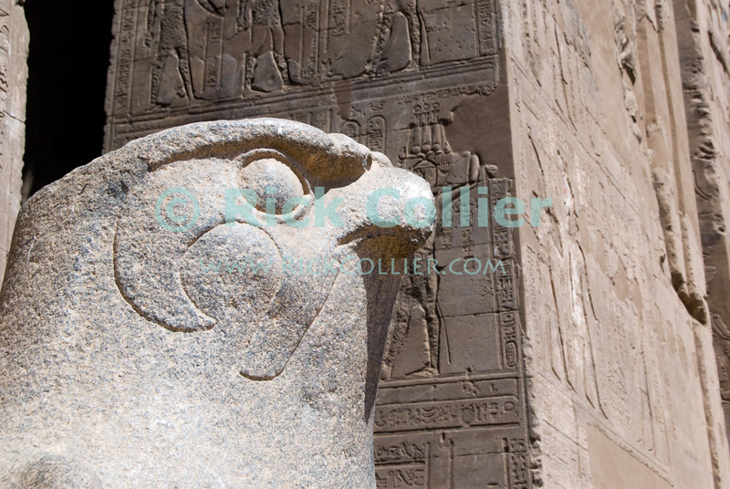 """Edfu, Egypt -- A statue of the falcon god Horus stands in front of the outer pylon of Edfu Temple.  Edfu temple is relatively new by Egyptian standards, having been built during the Ptolemaic dynasties in the period 237 to 57 BC.  Because it was built by the last Egyptian pharonic dynasties, it was not canibalized by successor dynasties and so is well preserved, still having complete walls and roof surrounding the inner, central temple area dedicated to the Falcon god Horus. © Rick Collier / RickCollier.com.<br /> <br /> <br /> <br /> travel; vacation; tour; tourism; tourist; destination; Egypt; Edfu; """"Edfu Temple""""; Horus; Ptolemaic; temple; pylon; falcon; """"falcon god""""; hieroglyph; hieroglyphic; """"ancient Egypt""""; Ptolemy; wall; column; art; ancient; antiquity; antiquities; statue; statuary;"""