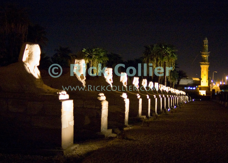 """Luxor Temple, Egypt.  Night time illumination.  This row of Sphinx statues, lit up at night, originally lined the road that once led from Luxor to Karnak temples.  Originally joined by both the Nile River and a road to the Temple of Amon at Karnak, Luxor was temple was considered the """"harem of the south,"""" the home of Amon's wife Mut and son Khonsu.  Once a year, a ceremonial procession took the statue of Amon from Karnak to spend the night with his family at Luxor.  © Rick Collier<br /> <br /> <br /> <br /> <br /> <br /> <br /> Egypt Egyptian Karnak Luxor Amon Amun tourist tourism history historic antiquity antiquities ruins temple tomb pylon wall column pillar ramp ancient 'ancient Egypt' Thebes Theban Thebian Mut Konsu Amun-Min Khonsu carving Ramses 'Ramses II' statue sphinx road night illumination lights dark 'after dark' nighttime"""