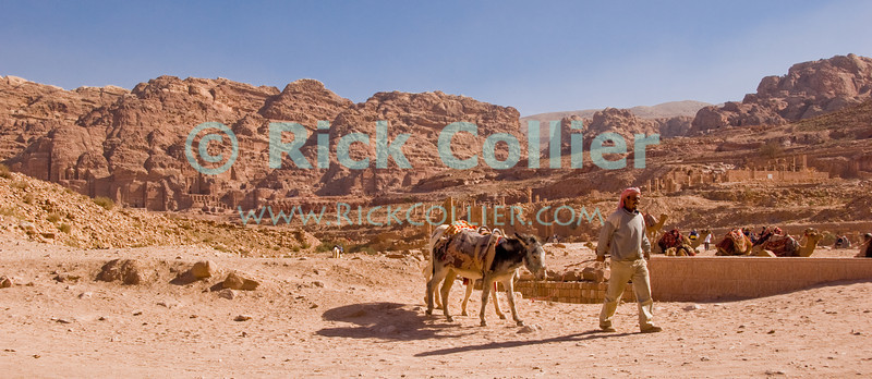 "Nabatea -- Roman ruins and the capital of Nabatea spread out behind a Bedouin man, seeking tourists to ride his mule ""taxi.""  © Rick Collier<br /> <br /> <br /> <br /> Jordan Petra Nabatea Nabatean Rome Roman ruin archeology 'ancient world' antiquity cave 'cave dwelling' antiquities Bible Biblical civilization history historic desert stone cliff wall carve carved facade tourist tourism archeology tomb tombs valley block blocks desert necropolis 'colonnaded street' 'Cardo Maximus' donkey arab bedouin"