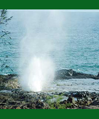 """<a title=""""Make a reservation for Aloha Discovery Island Tours, South-East To North Excursion with Tom Barefoot's Tours"""" href=""""http://www.tombarefootshawaiitoursactivities.com/product.php?id=3601&name=South-East_To_North_Excursion"""">Aloha Discovery Island Tours, South-East To North Excursion</a>"""