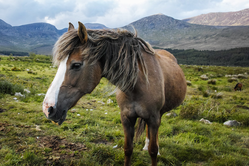 sigma dp1 quattro horse mourne mountains Ireland