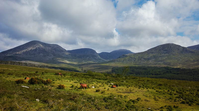 sigma dp1 quattro muore mountain horses Ireland landscape