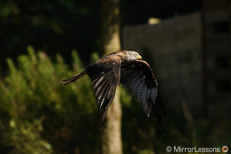sigma mc-11 birds in flight