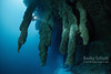 The Great Blue Hole Belize Stalagtites and diver